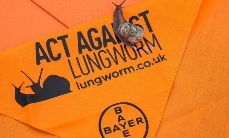 Bayer, Lungworm, Snails